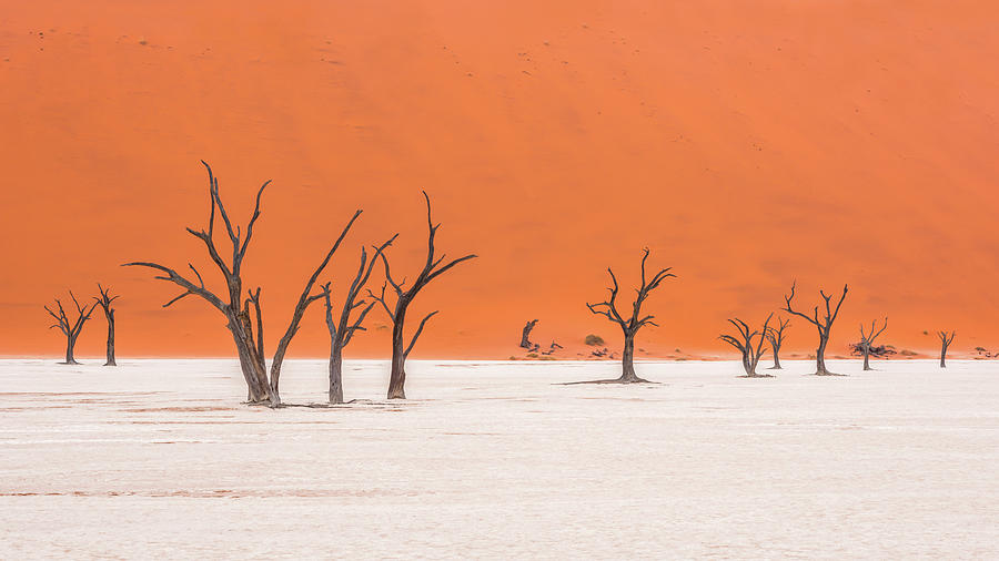 Africa Photograph - Frozen In Time by Hamish Mitchell