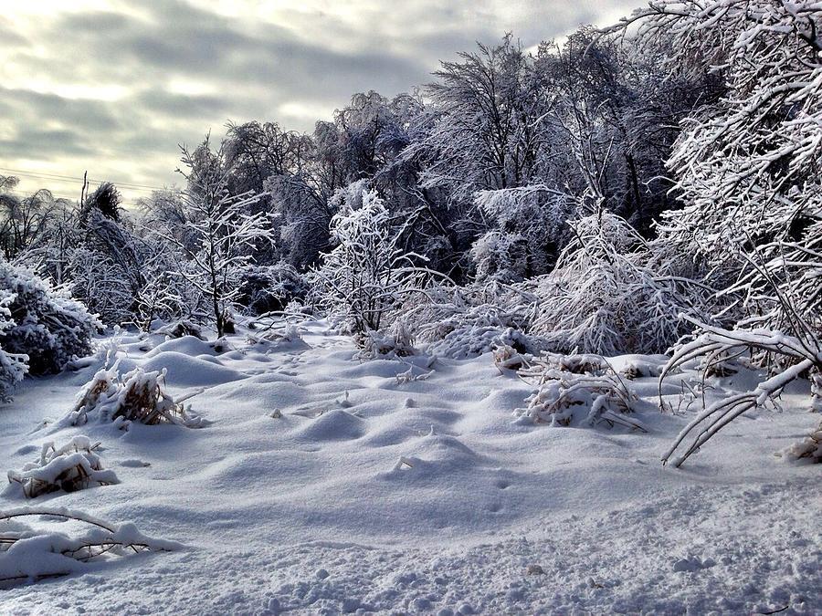 Landscape Photograph - Frozen Landscape by Marty Klar