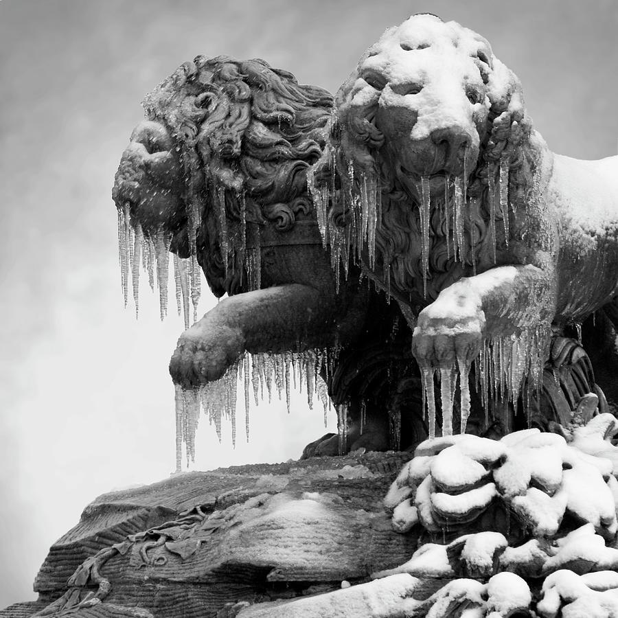 Frozen Lions Photograph by Fotografias De Rodolfo Velasco