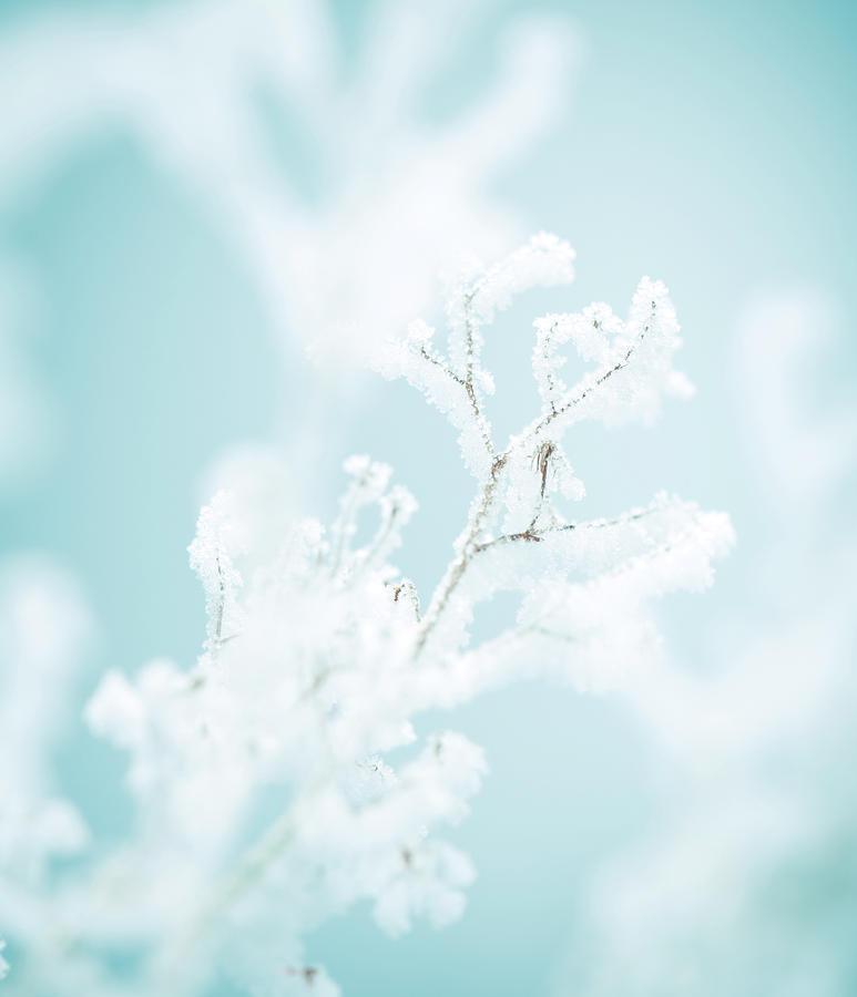 Frozen Nature Photograph by Svetikd