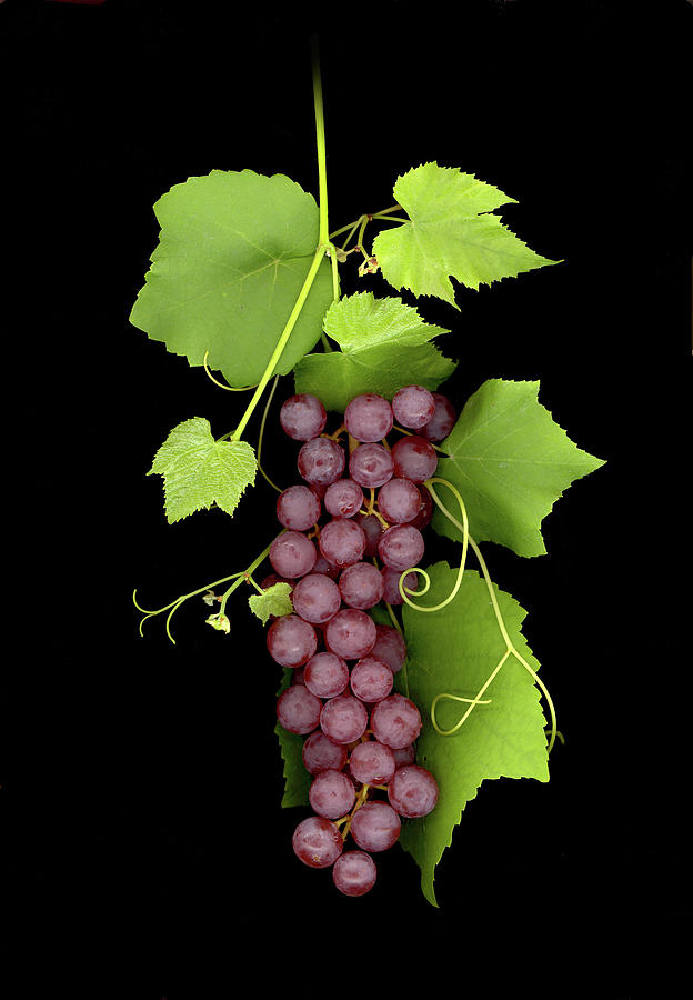 Fruit Of The Vine Photograph by Sandi F Hutchins