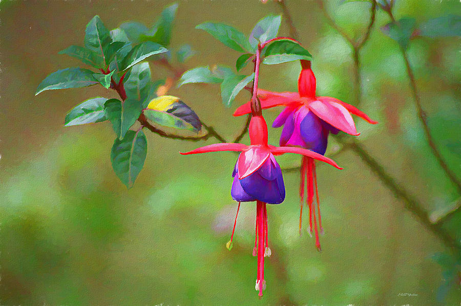 Fuchsia Flower - Painting by Ericamaxine Price
