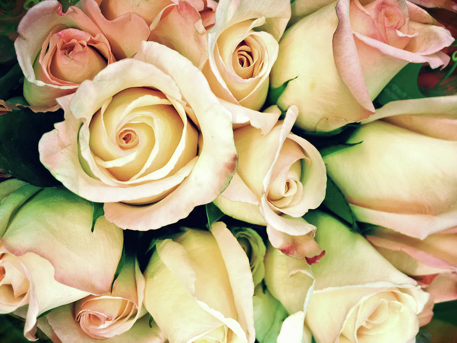 Petal Photograph - Full Frame Cross Processed Rose Bouquet by Travelif