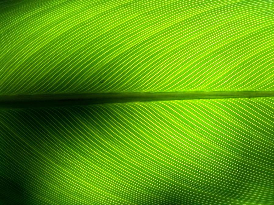 Full Frame Shot Of Green Leaf Photograph by Kiyoshi Nasu / Eyeem
