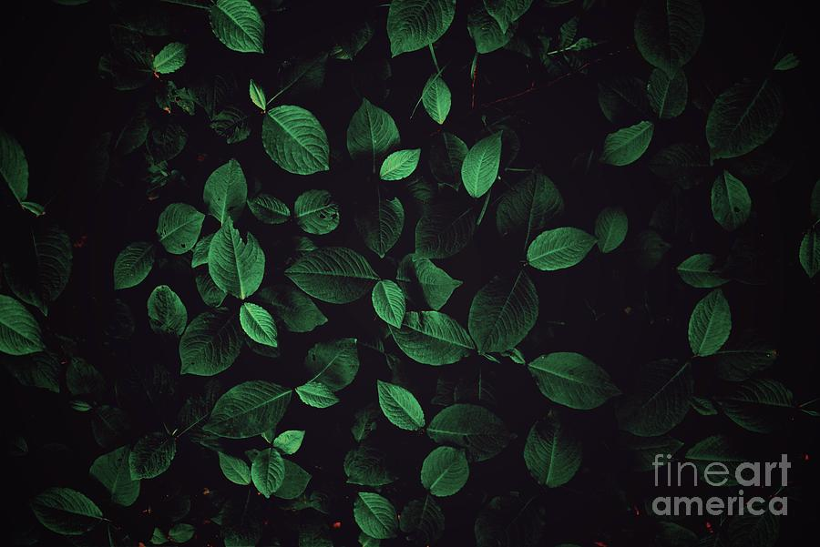 Full Frame Shot Of Plants In Forest Photograph by Yamaguchi Tomoya / Eyeem