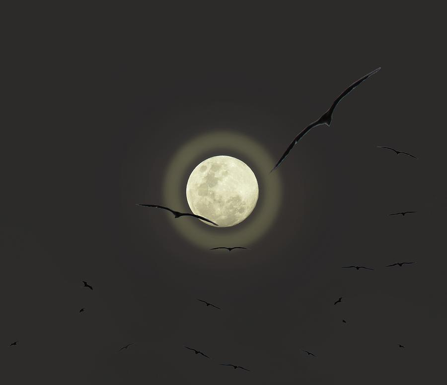 Full Moon and Frigate Birds by Joan Stratton