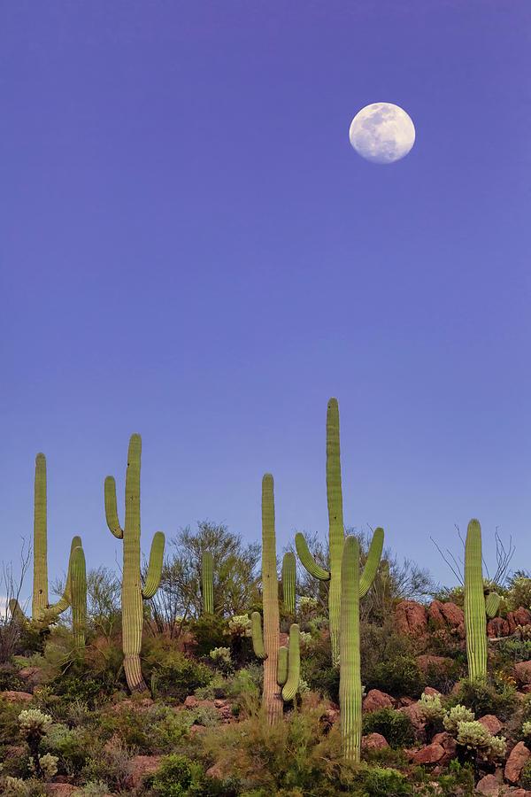 Full Moon Over Saguaro National Monument by Rick Furmanek