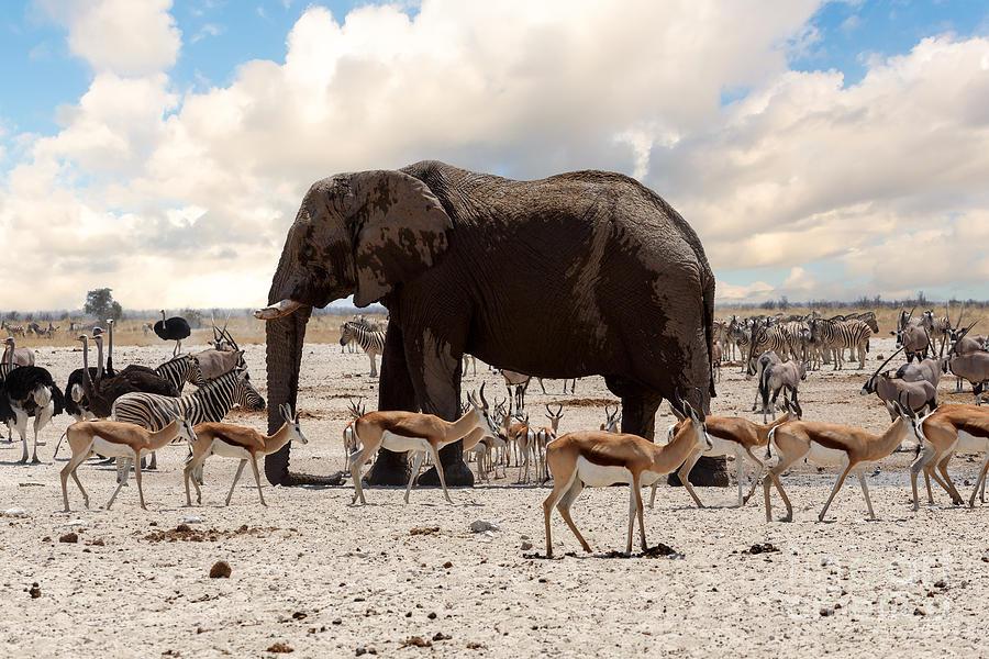 Southern Photograph - Full Waterhole With Elephants Zebras by Artush