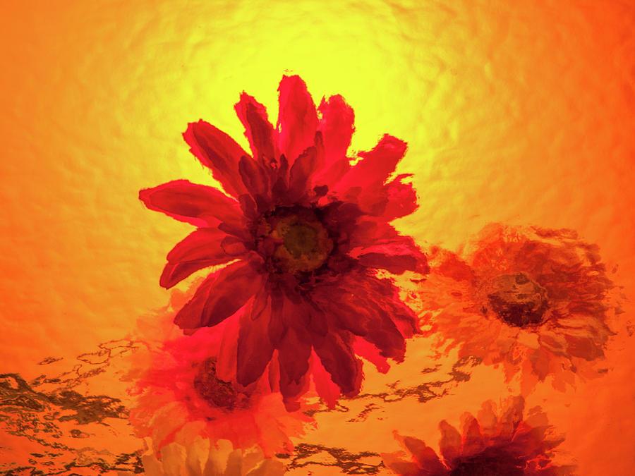 Fun Flower by Stewart Helberg