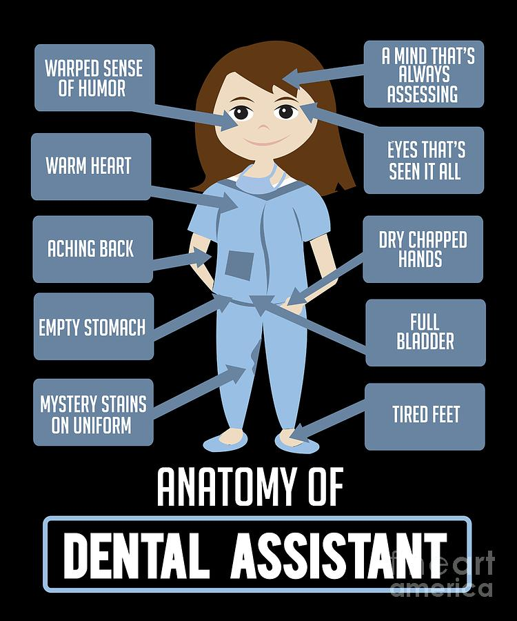 Funny Dentist Quote Anatomy Of Dental Assistant