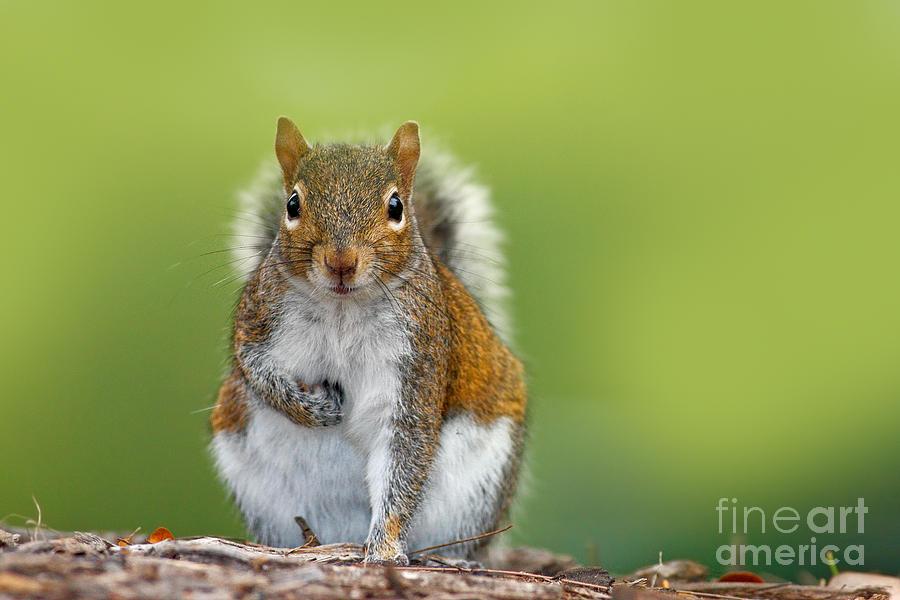 Studio Photograph - Funny Image From Wild Nature Gray by Ondrej Prosicky