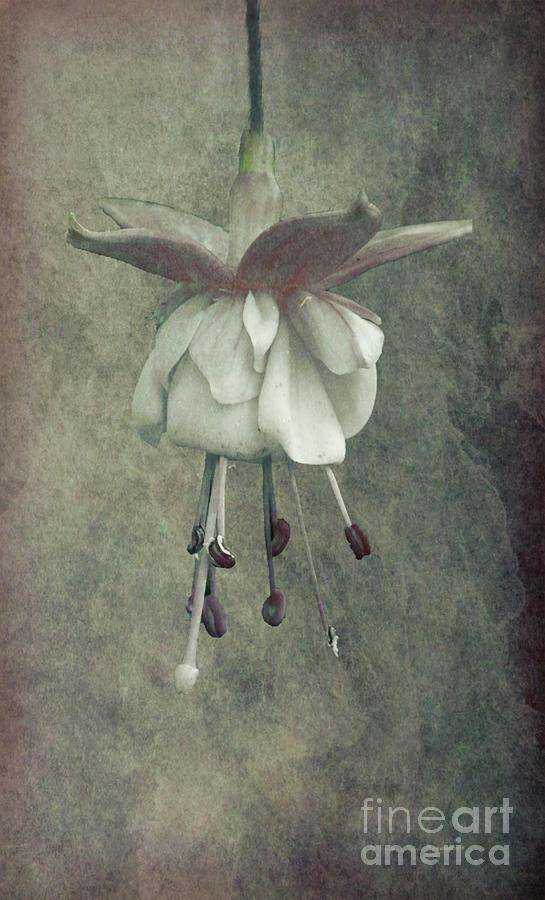 Fuschia by Lynn Bolt