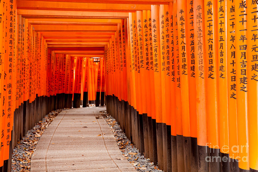 Forest Photograph - Fushimi Inari Taisha Shrine In Kyoto by Pigprox