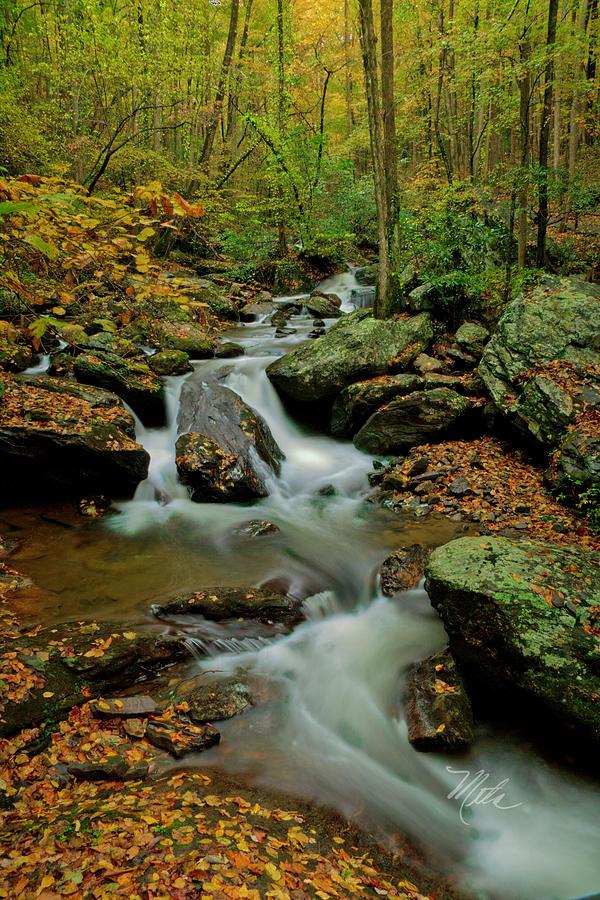 GA Mtn Stream by Meta Gatschenberger
