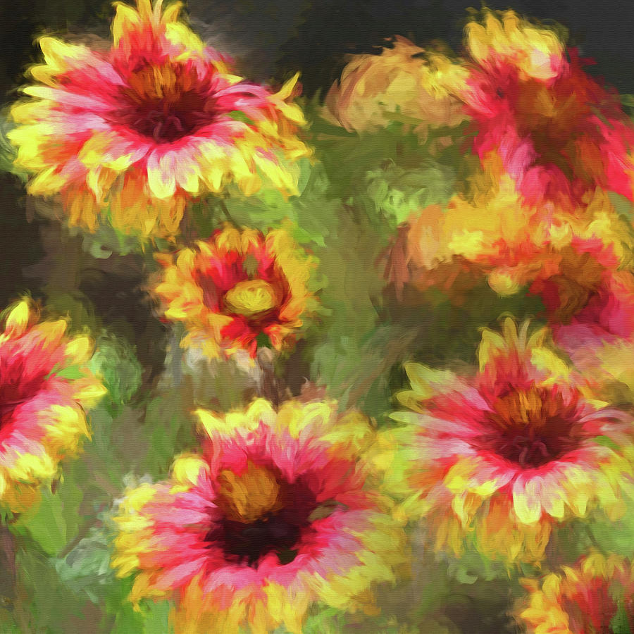 Gaillardia Wildflower by HH Photography of Florida