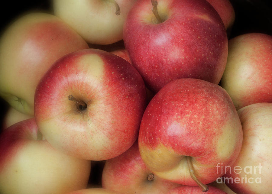 Gala Apples by Ann Jacobson