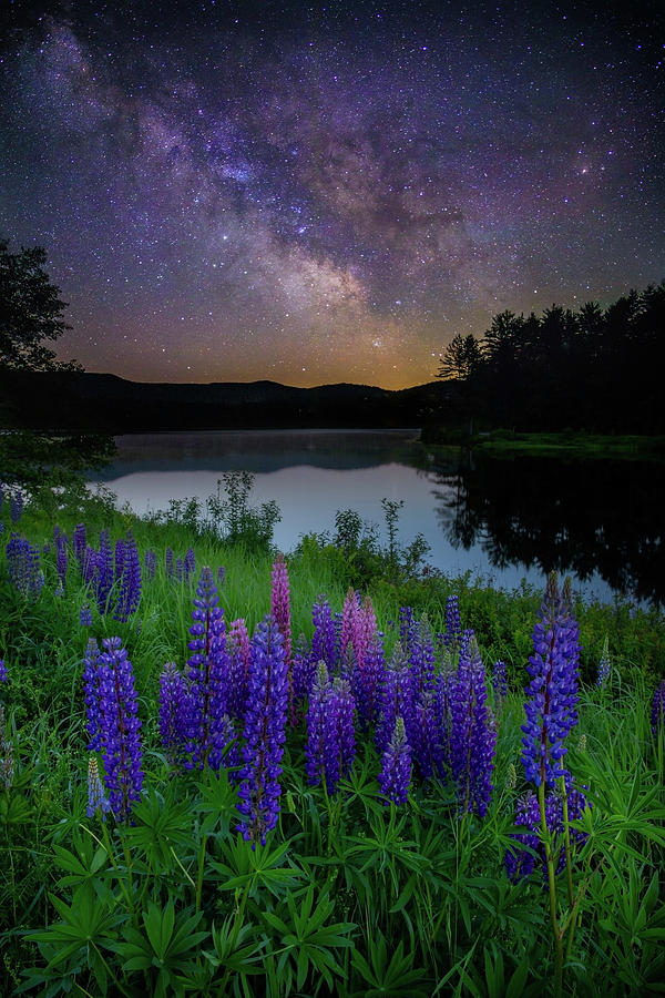 Galactic Lupines by Rob Davies
