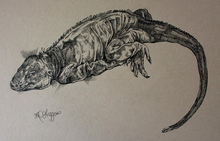 Galapagos Iguana by Derrick Higgins