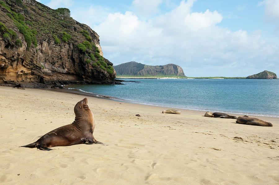 Galapagos Sea Lion At Punta Pitt Photograph by Tui De Roy