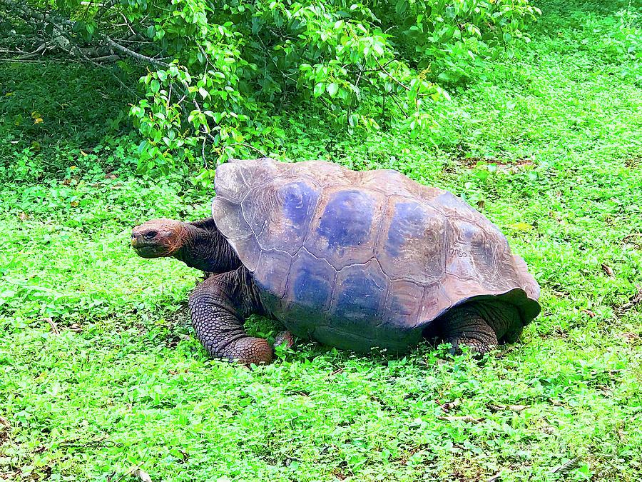 Galapagos Tortuga Photograph