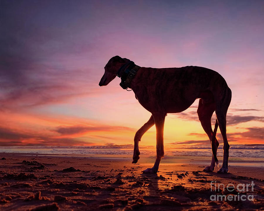 Dog at Scheveningen Beach by Travis Patenaude