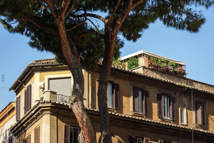 Gallivanting Around in Rome Italy - Signature Umbrella Pine and Attico con Terrazzo by Georgia Mizuleva