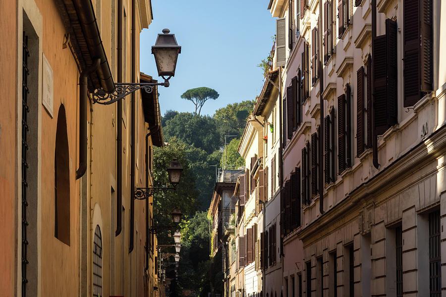 Gallivanting Around in Rome Italy - Small Street with a Signature Umbrella Pine by Georgia Mizuleva