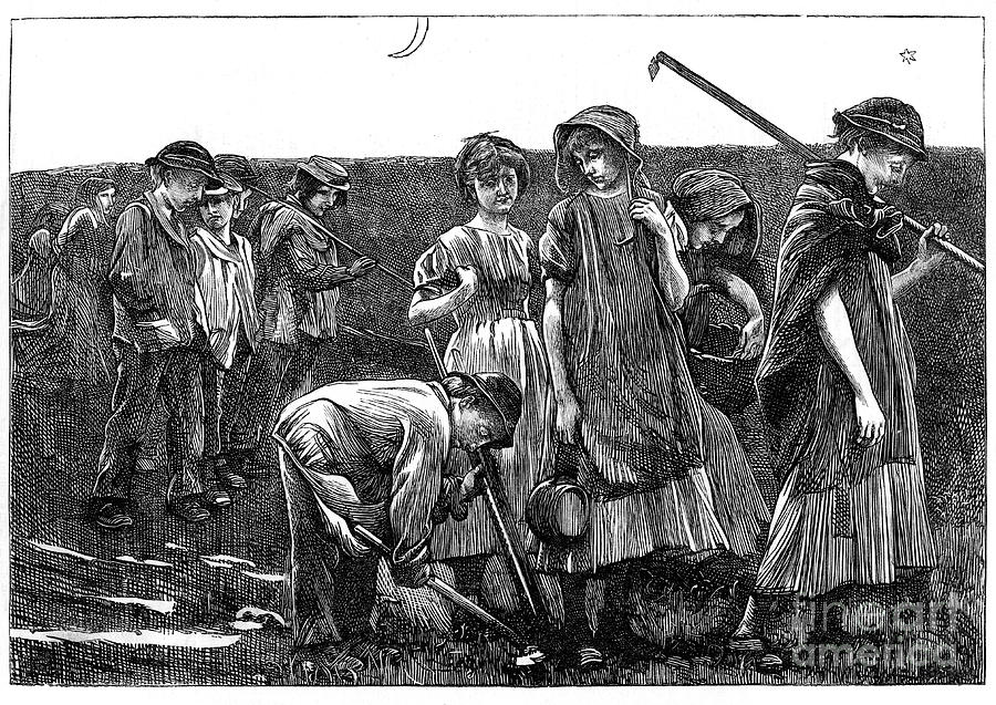 Gang System Of Child Labour, C1885 Drawing by Print Collector