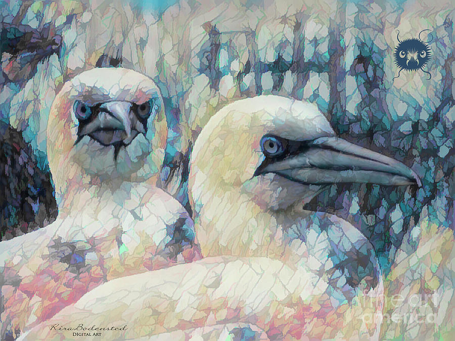 Gannets by Kira Bodensted