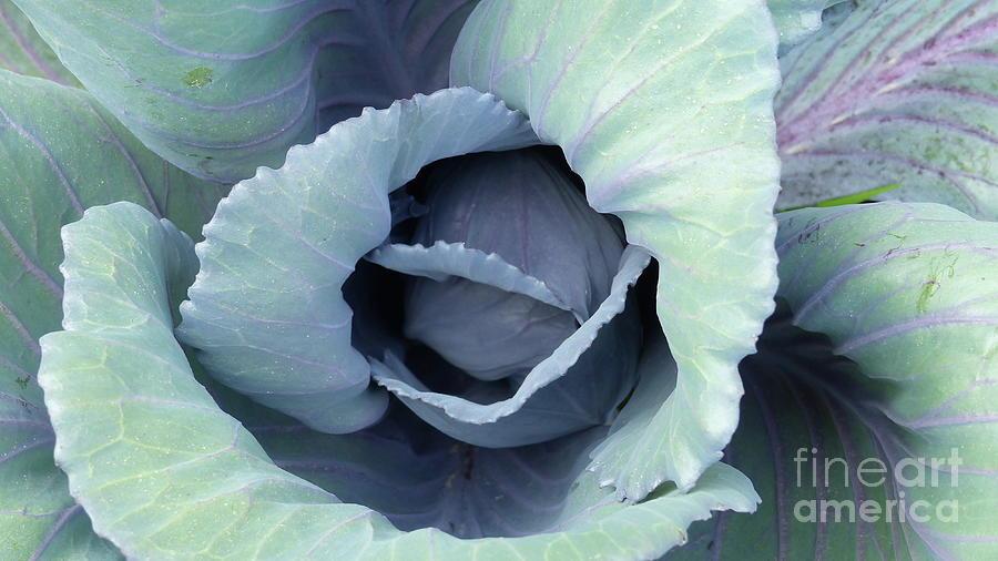 Garden Beauty by Rosanne Licciardi