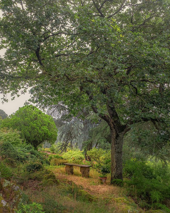 France Photograph - Garden Bench by Joseph Smith