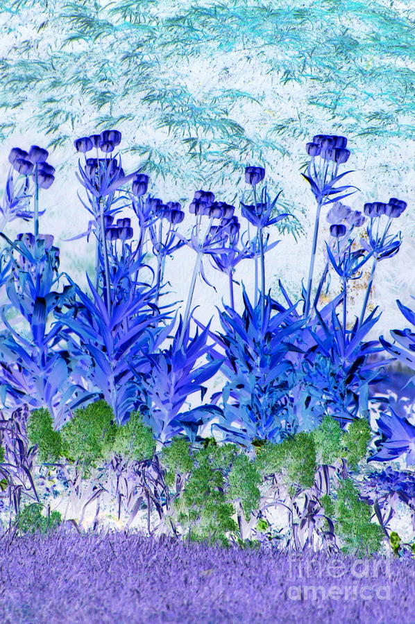 Garden blues by Frank Townsley