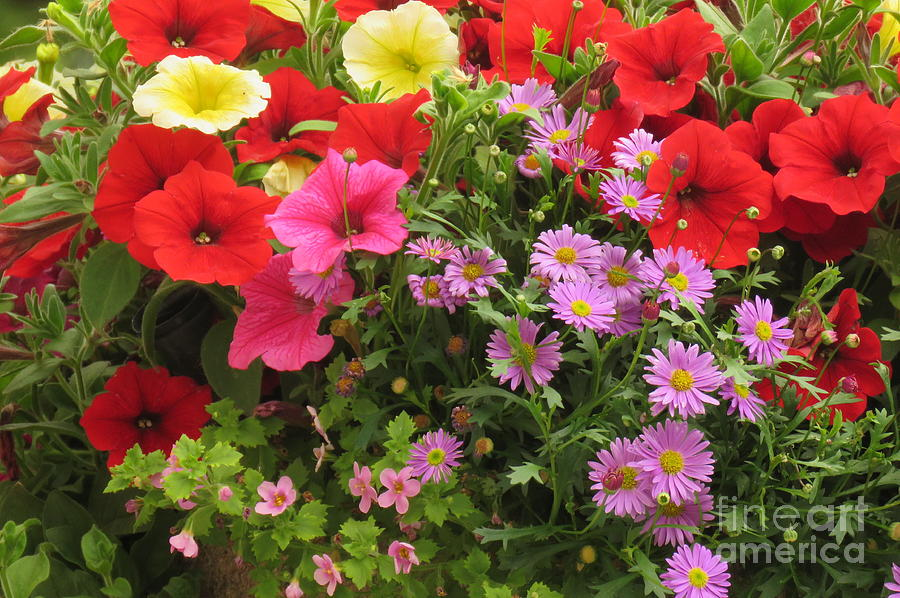 Garden bouquet by Frank Townsley