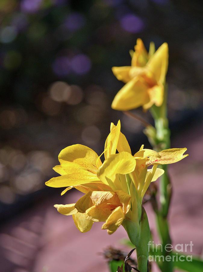 Garden Flora by Gary Richards