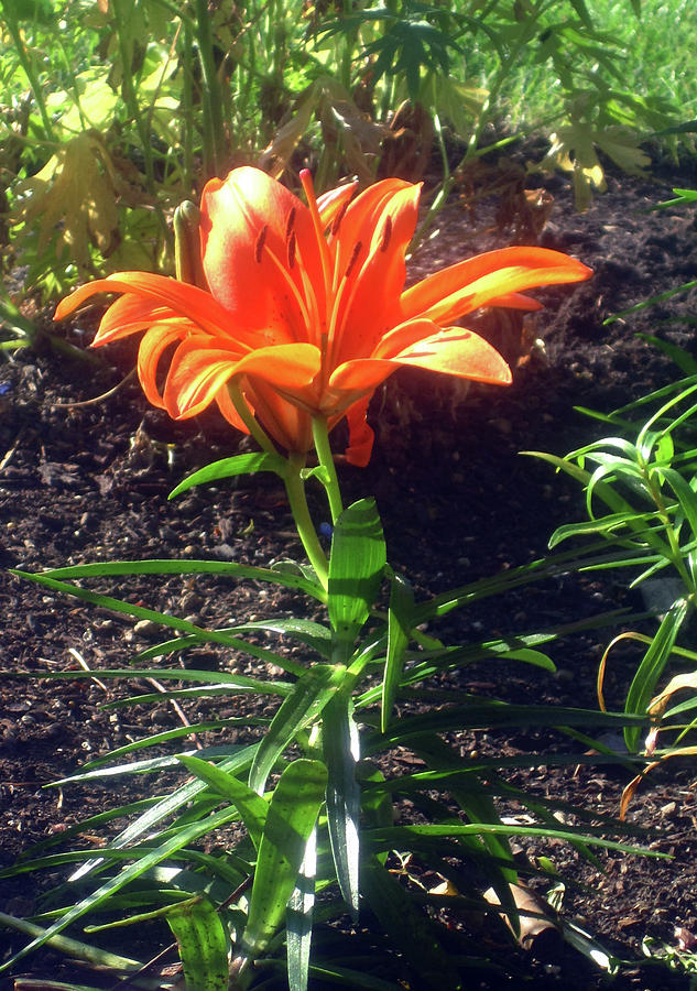 Garden Flower Orange by Jaeda DeWalt