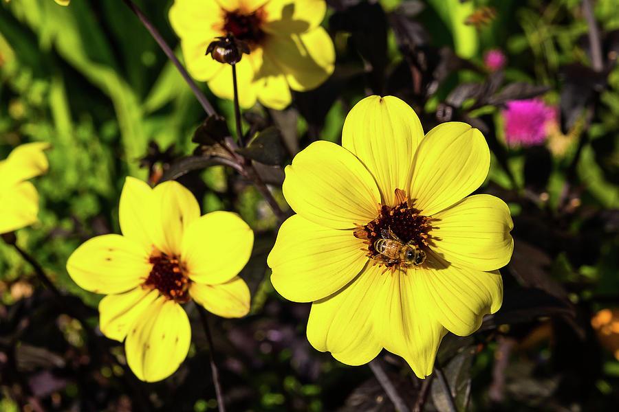 Garden flowers - 12 by Paul MAURICE