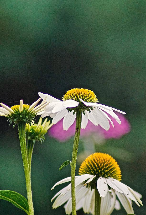 Garden Photograph - Garden by Gillis Cone