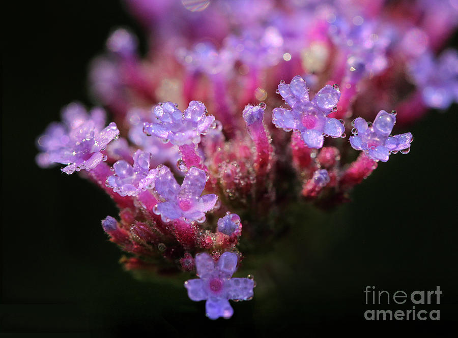 Flower Macro Photograph - Garden Glam by Karen Adams