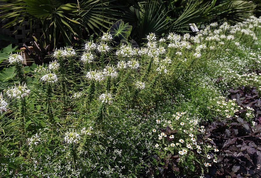Garden Glory by Suzanne Gaff