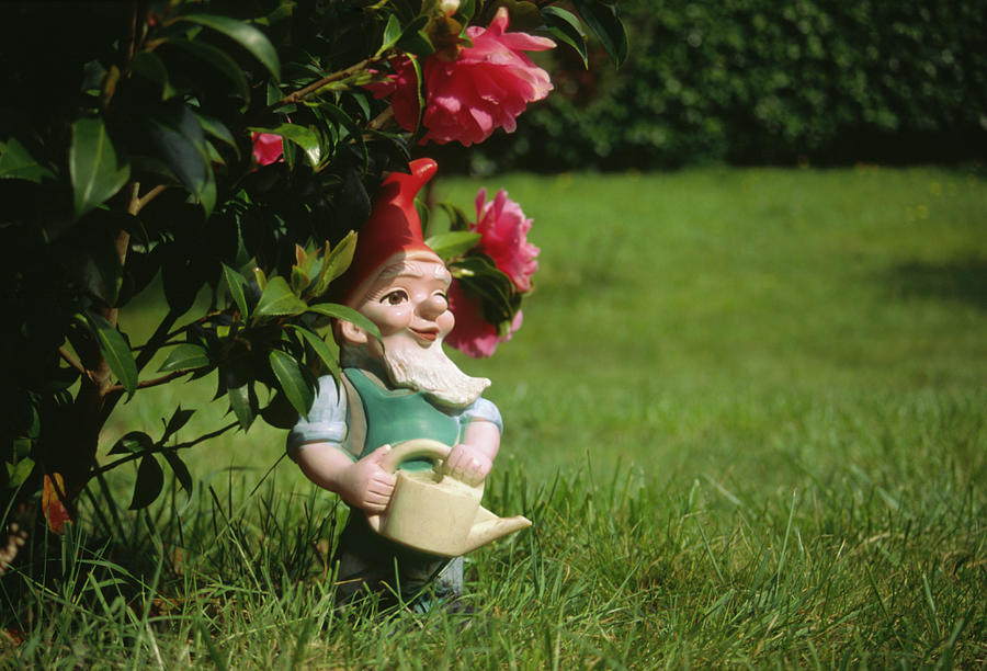 Garden Gnome With Watering Can Under Photograph by Juxtapose