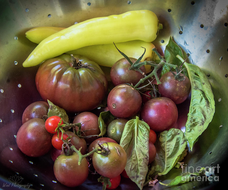 Vegetables Photograph - Garden Harvest by Diana Wind