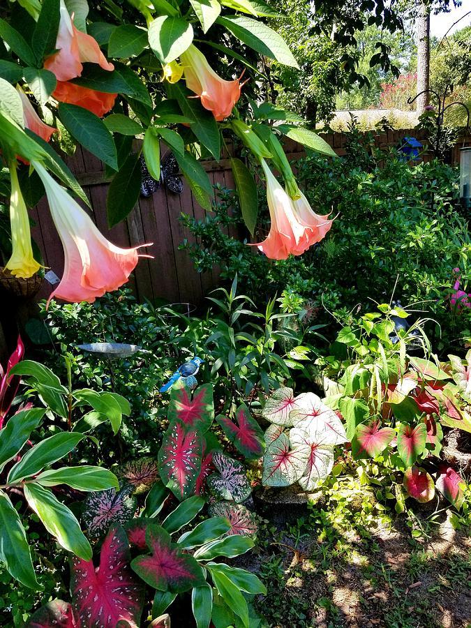 Garden III by Joe Roache