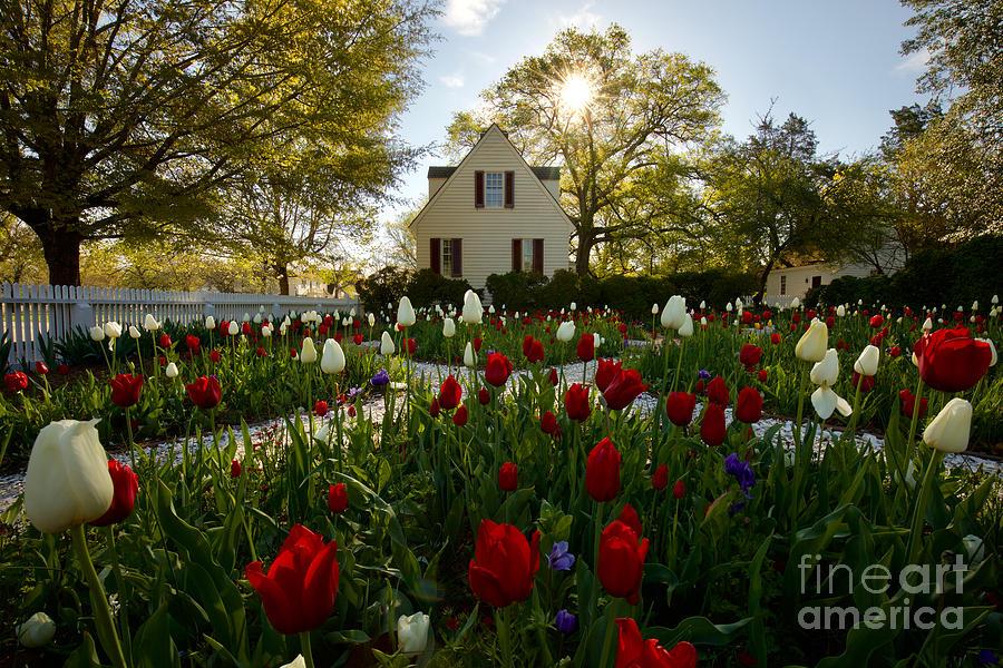 Garden in the Spring by Rachel Morrison