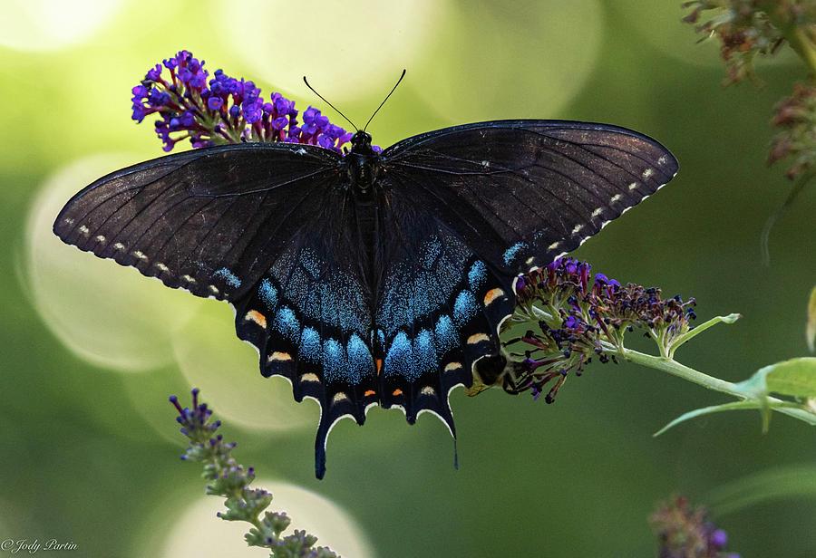 Garden Magic by Jody Partin