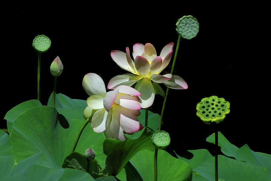 Garden Party by Carol Eade