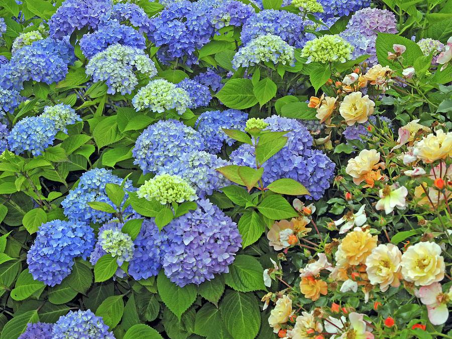 Garden Splendor 2 by Lynda Lehmann