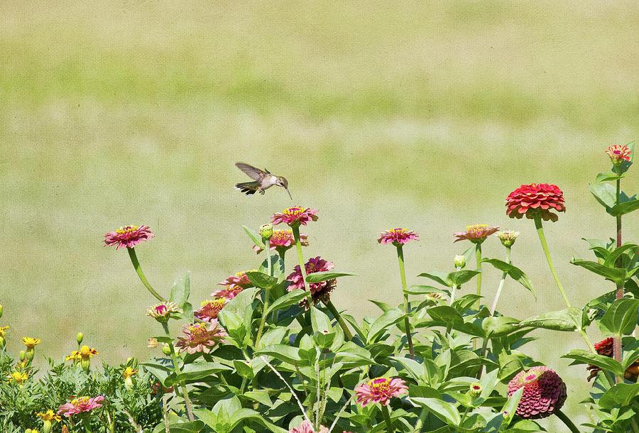 Garden Photograph by Straublund Photography
