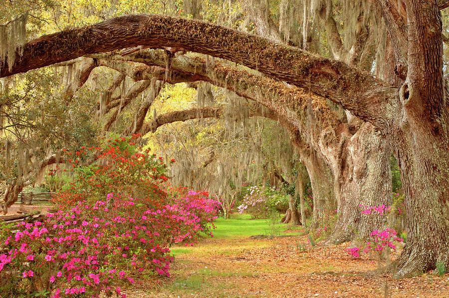 Garden Photograph by Tony Sweet