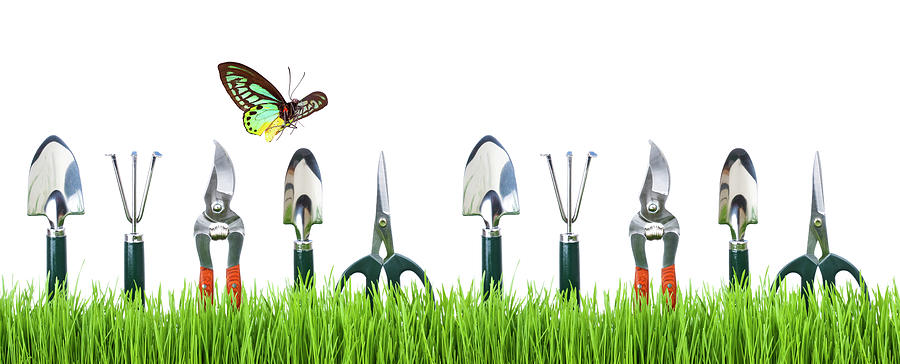 Garden Tools Photograph by Liliboas
