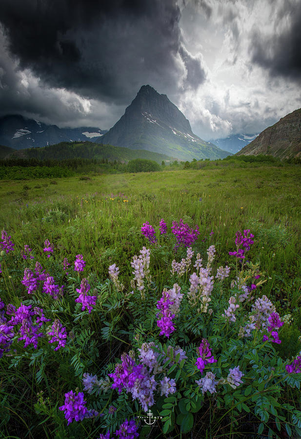 Garden Valley / Many Glacier, Glacier National Park  by Nicholas Parker